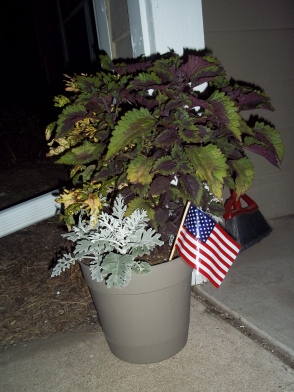 Even Carl and Ellie (yes the plants) were patriotic.