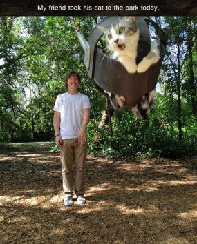 http://themetapicture.com/weeeeeeee/