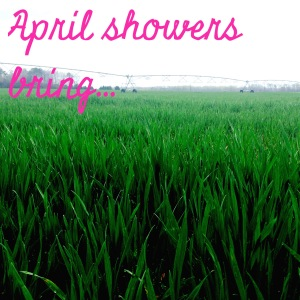 april showers bring...