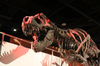 Museum of Natural History: T-Rex