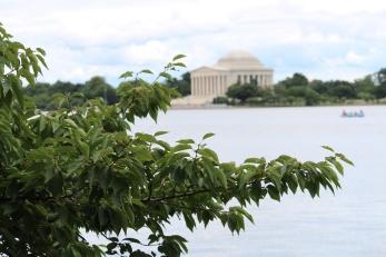 Jefferson Memorial from across the Tidal Basin