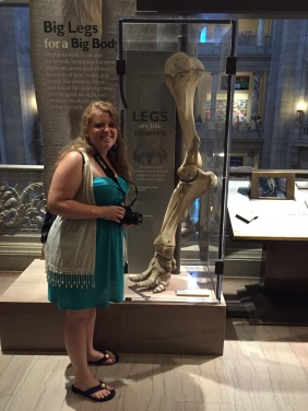 Museum of Natural History: The elephant leg is taller than me!