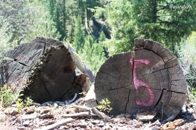 Dad showed me the remains of a fallen logging train trestle he found years ago.