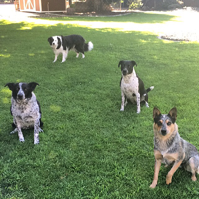 The whole crew is here! (L to R) Jack, Ellie, Ruby and Remi.