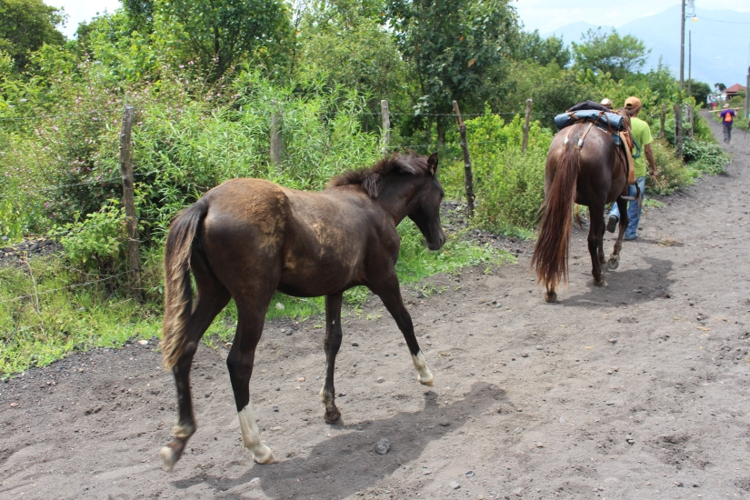 This foal followed its mama all the way up the hike and back down.