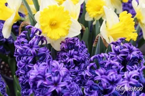Bryant Park flowers - EDITED NAMEMARK