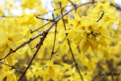 flowers in Central Park - EDITED NAMEMARK