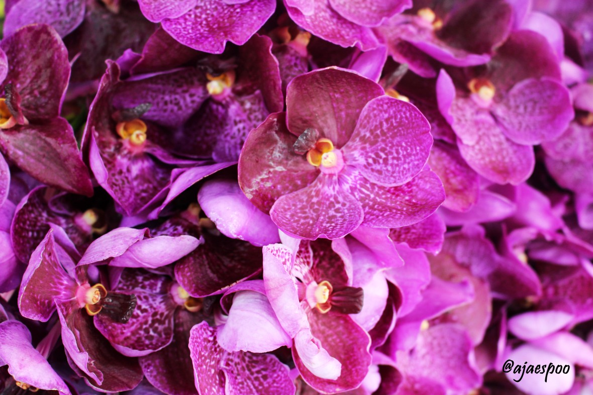 purple orchid with namemark