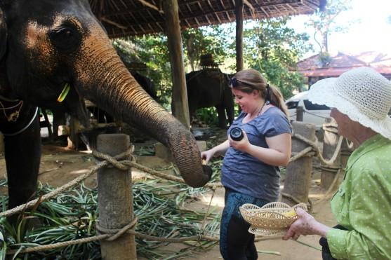 feeding elephants 1