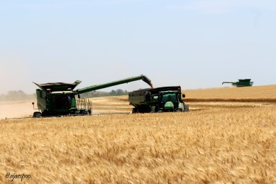Kansas wheat harvest
