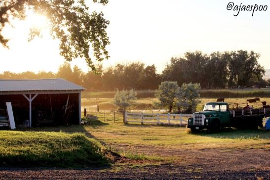 JUN18 - Summer on the Farm (10) NAMEMARK