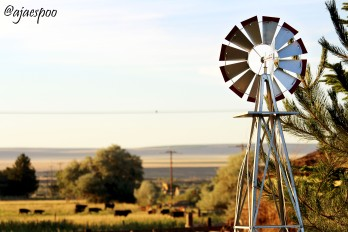 JUN18 - Summer on the Farm (6) NAMEMARK