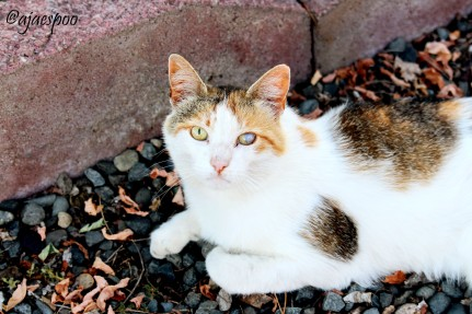 JUN18 - Summer on the Farm - Abigal (1) NAMEMARK