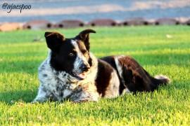 JUN18 - Summer on the Farm - Jack (8) NAMEMARK