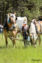 JUN18 - Wagon Train (73) NAMEMARK