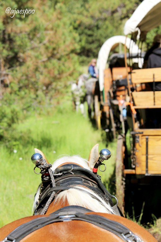 JUN18 - Wagon Train (8) NAMEMARK